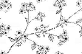 シームレスなさくらの花パターンの背景ライン アートの図を図面と黒と白