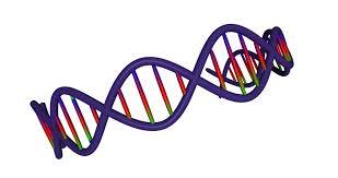 chromosome clipart ile ilgili görsel sonucu