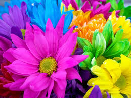 Colorful Flowers Check Out the Immanuel Prayer Wheel - Maranatha Prayer  Community today and fellowship with