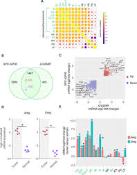 Comparative mRNA and miRNA transcriptome analysis of a mouse model ...