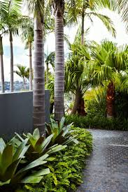 This Mosman garden of ours would be the perfect spot to kick back and relax  in this warm weather. Giant bromeliads, Philodendron xanadu and Cabbage  Palms ...