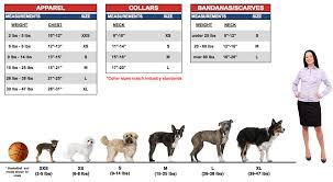 dog crates size chart the proper size note that the sizes shown in this graphic are for