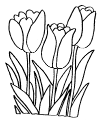 Printable Tulips Flower Coloring Pages Watercolor Printable