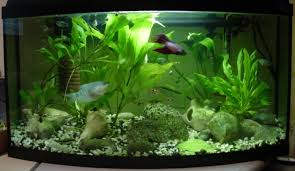 Aquarium Decorating Tips Decoration Ideas