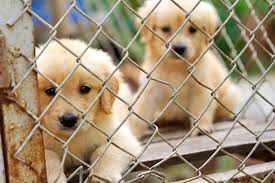 animal shelter pictures. Simple Pictures Animalshelterpuppies For Animal Shelter Pictures S