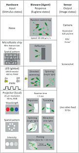 What Detects Light In The Euglena Overview Of The Stimulus Space The Microfluidic Chip Leds