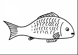Small Picture Tuna Fish Coloring Pages Coloring Pages