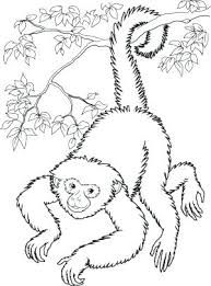 Monkey Coloring Sheet Spider Monkey Coloring Page Free Printable