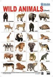 wild animals chart. Beautiful Animals Wild Animals Chart For Flipkart