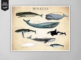 Whale Chart Art Print Whale Species Natural History Poster Natural History Print Whale Species Print Whales Whale Chart Whale Species