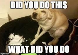 Every guilty dog video ever - Imgflip via Relatably.com