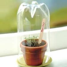 Image result for seedlings pop bottle