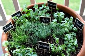 growing herbs is very beneficial since you will have a full stock of herbs within your reach it is also very simple since most of the herbs require a