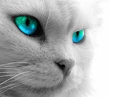 <b>Машинка для стрижки</b> кошек, купить <b>машинки для стрижки</b> котов ...
