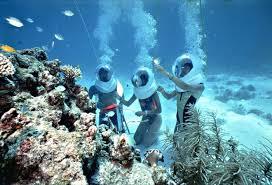 """Kết quả hình ảnh cho """"Đảo San Hô"""" – đảo Coral"""