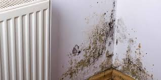 how to get rid of mould top removal