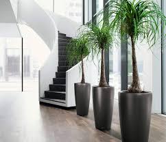 office pot plants. Modern Herb Pots Interior Plants Office For Home Designing Inspiration Vintage Pot Chrome Planter Mid Century R
