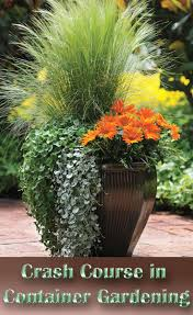 24 Stunning Container Garden Planting Designs  Planting Rainbows Container Garden Plans Flowers