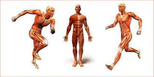 9 Free Body Diagram Free Printable Download Free