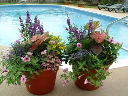 container flower gardening container flowers that bloom all summer colorful  pool horticulture various plants