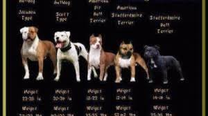 most mon breeds of dogs breed dogs spinningpetsyarn top 10 por dog breeds in california top 10 most