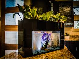 Self Cleaning Fish Tank Garden Aquasprouts System Transforms Fish Tank Into Garden Business Insider