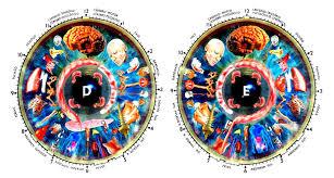 Iridology Chart Pdf Iridology Diagnosis Chart Pdf Iriscope Iridology Camera