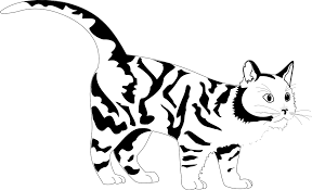Small Picture Tiger Cat Black White Line Art Coloring Sheet Colouring Page