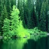 Лес легкие Земли проблема охраны польза леса на Ваш Сад  Лес легкие Земли