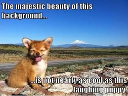 FunniestMemes.com - Funniest Memes - [The Majestic Beauty Of This ... via Relatably.com