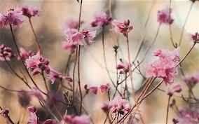 Resultado de imagen para imagenes de flores color durazno