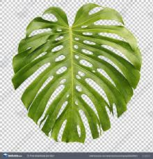 Tropical Leaves. 178 of 260 photosets