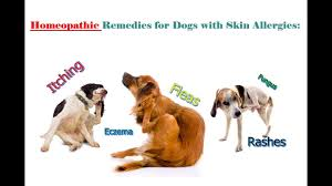 Homeopathic Remedies for Dogs Skin Allergies: Itching, Fleas ...