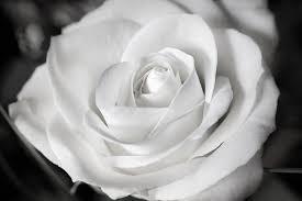 Glückwünsche Und Sprüche Zur Silberhochzeit Sprüche Wünsche Und