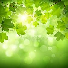 Free Green Background Green Stock Backgrounds Royalty Free Green Fire