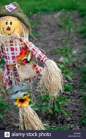 Plants For Kitchen Garden A Scarecrow In A Kitchen Garden With Some Peppers Plants Stock