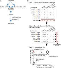 Oma A Flow Chart Depicting The Motif Segregation Method