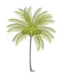 essay coconut tree kids