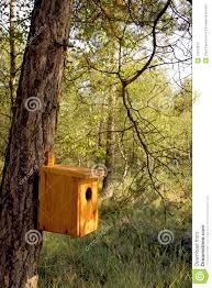 Hanging Tree House Hand Made Bird House Hanging On A Tree Trunk Royalty Free Stock