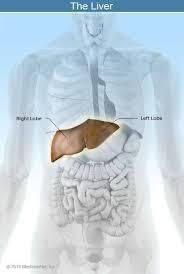 liver disease symptoms signs causes