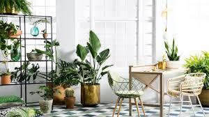 spring-botanicals-indoor-plants-greenery-expert-tips Healthy home tips