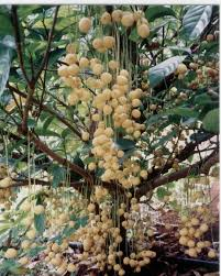Bearing Fruit Of Hearts With FamilyTree Bearing Fruit