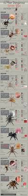Different Spider Bites Chart A Guide To The Most Dangerous Spider Bites And The Symptoms