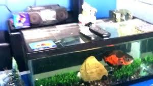 fish tank tables for coffee table aquariums coffee table aquariums coffee table fish tank coffee table aquariums for