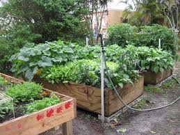 Small Picture Vegetable Gardening In Florida Gardening Ideas