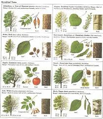 Tree Identification Chart How Can Leaves Identify A Tree An Amazing Guide To Leaf