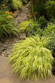 shade plants top 20 shade perennials