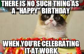 grumpy cat birthday bird. Exellent Cat Munchingbrotato Grumpy Cat 40548  INTERIORDESIGN And Birthday Bird A