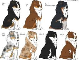 Aussie Color Chart Honey Lake Mini Aussies Aussie Dogs
