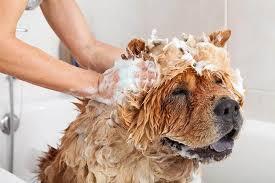 how often should i wash my dog